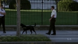 US Secret Service Boosts White House Security after Intrusion