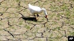 হ্যালো ওয়াশিংটন: জলবায়ু সম্মেলন ২০১১