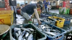 File - Workers sort fish at a fishing port in North Jakarta, Indonesia.