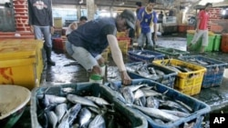 Workers sort fish at a fishing port in North Jakarta, Indonesia (March 2010 file photo)