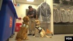 Anjing-anjing First Responders K-9 yang dilatih untuk membantu petugas kepolisian mengatasi dan membantu pemulihan dari stres karena pekerjaan berisiko tinggi.