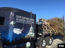 今年的国会圣诞树来自阿拉斯加。(美国之音杨晨拍摄)