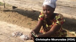 Reportage de Christophe Nkurunziza Bujumbura, correspondant à Kajaga pour VOA Afrique