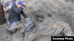 Researcher Sergey Gorbunov works on excavation of woolly mammoth carcass, eastern shore of Yenisei Bay, central Siberian Arctic (undated handout photo: Alexei Tikhonov, Russian Academy of Sciences).