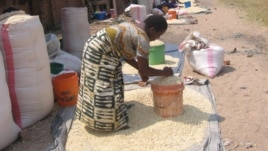 Farmers selling maize after harvest in Malawi's northern district of Karonga. (VOA / T. Kumwenda)