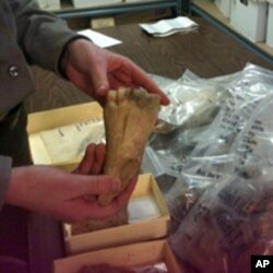 Bones of animals - such as cows and fish - discovered at the site, help archeologists piece together what the slave population's diet might have been.