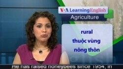 Anh ngữ đặc biệt: Number of honeybees declining (VOA)