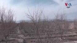 د بلوچستان ایالت زمیدار وايي سږ کال په ایالت کې د وچکالۍ خطر زیات دی