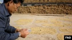 유엔 식량농업기구 관계자가 지난 2012년 북한에서 작황과 식량안보 조사를 벌이고 있다. (자료사진)