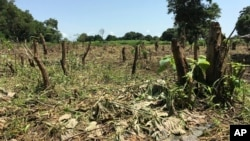 FILE - A field that was once a densely populated forest lays bare near Rajaf, outside Juba, in South Sudan, as the world's youngest nation goes into its fourth year of civil war.