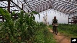 중국 베이징 외곽의 옥수수 농장. (자료 사진)