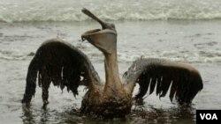 BP harus membayar para nelayan dan penggugat lainnya miliaran dolar atas kasus tumpahan minyak di Teluk Meksiko.