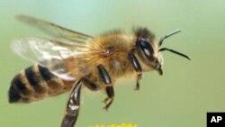 Američki vojnici pomažu Afganistancima kroz pčelarstvo