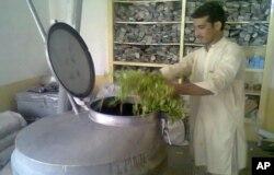 کشت نعناع جاگزین تریاک در شرق افغانستان