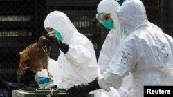 Un trabajador de la salud remueve un pollo muerto en un mercado de aves vivas en China.