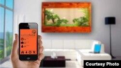 WallTop Forest app và sản phẩm mẫu trong không gian nhà
