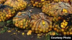Villagers are selling wild fruits that include mazhanje, matamba and matohwe, among others.