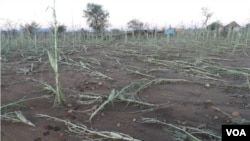 El Nino is expected to affect counties like Zimbabwe. (Photo: COMALISA - Coalition for Market and Liberal Solutions, Zimbabwe)