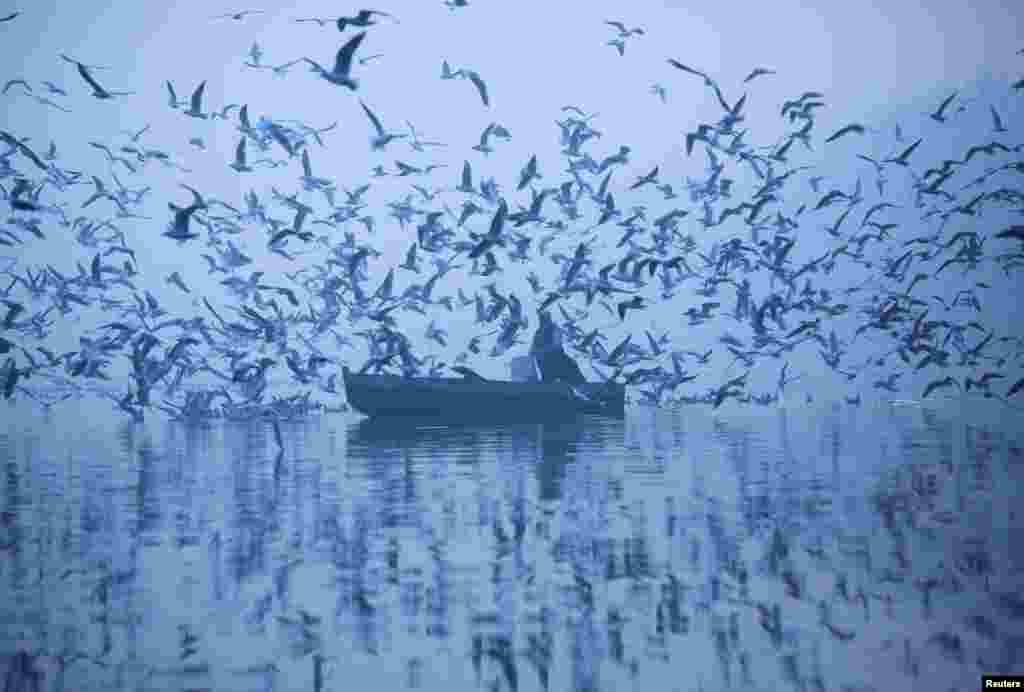Seorang pria memberi makan burung-burung camar sambil mengayuh perahunya di perairan sungai Yamuna pada pagi hari yang dingin berkabut di New Delhi, India.