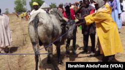 Lokacin Kaddamar Da Sabuwar Allurar Rigakafin Dabbobi A Adamawa