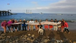 Serpent-like Fish Found Off California Coast