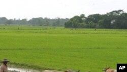 چھوٹے کسانوں کی حالت بہتر بنا کر خوراک کی قلت پر قابو پایا جاسکتا ہے