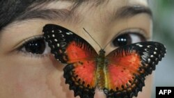 A butterfly (Cethosia Biblis) lands on the face of a girl during a butterfly exhibition in Bishkek, Kyrgyzstan, Jan. 2015.(AFP PHOTO)