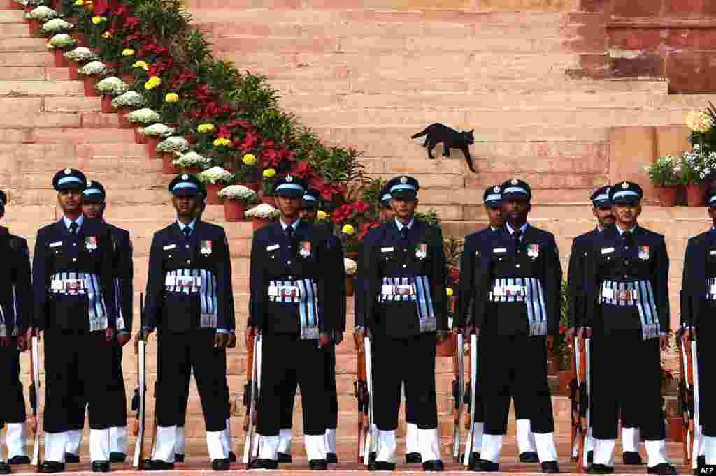 A cat makes its way down the stairs at the Rashtrapati Bhawan, or Presidential Palace, in the Indian captial New Delhi, as an honor guard stands in formation prior to the welcome ceremony for Sri Lankan President Maithripala Sirisena.