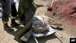 Con cọp sổng khỏi một vườn thú bị ngập nước ở thủ đô Tbilisi của Gruzia đã bị cảnh sát bắn chết sau khi tấn công và giết chết một người đàn ông hôm thứ Tư, 17/6/2015.
