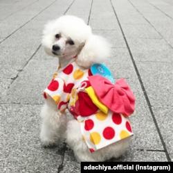 Selama Olimpiade, Mei ikut bertugas untuk menjajakan kimono khusus binatang yang dijual di toko Adachiya, Tokyo, Jepang. (IG/ adachiya.official)