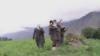Afg'oniston IShID ta'siri kuchaygani haqidagi Rossiya da'vosini rad etdi