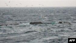 Một tàu đánh cá của Trung Quốc bị chìm trong vùng biển phía tây Nam Triều Tiên, ngoài khơi Gunsan (ảnh do lực lượng tuần duyên Nam Triều Tiên cung cấp cho hãng tin Yonhap, ngày 18 tháng 12, 2010)