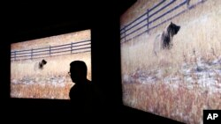 Sony 8K prototype televisions are on display after a Sony news conference at CES International, Monday, Jan. 8, 2018, in Las Vegas. (AP Photo/John Locher)