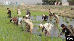 Pemerintah berharap, masyarakat bisa memahami bahwa kenaikan beras disebabkan oleh berbagai faktor, termasuk akibat gagal panen dan terhambatnya suplai.