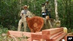 Một khu rừng bị tàn phá ở tỉnh Kampong Thom ở phía bắc Phnom Penh, Campuchia.