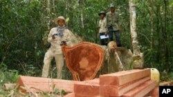 Nhà hoạt động Chut Wutty, trái, trong 1 khu rừng ở tỉnh Kampong Thom, phía bắc Phnom Penh, 6/2/2012