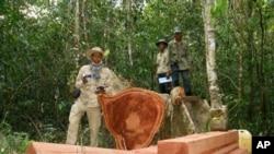 Aktivis lingkungan Chut Wutty dibunuh April lalu secara misterius ketika menyelidiki penebangan kayu liar di Kamboja (foto: Dok).