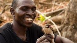 Bản tin khoa học hàng tuần: Những điều thú vị về chim báo mật và cuộc đua cứu loài ong mật