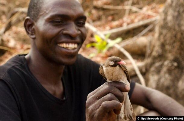 Một thợ săn mật ong Yao giữ một chú chim báo mật đực trên tay.