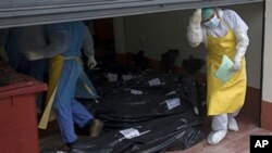 Morgue employees in San Benito take in the bodies that were found on a ranch in northern Guatemala, May 16, 2011