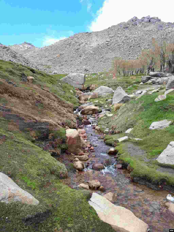 دشت میشان کوههای عباس آباد همدان عکس: احمد (ارسالی شما)