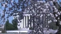 Црешов цут во Вашингтон