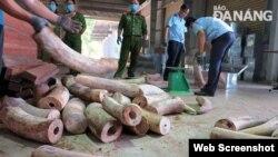 Hải quan Đà Nẵng thu giữ hơn 9 tấn ngà voi nhập lậu từ Congo. Photo Báo Đà Nẵng.
