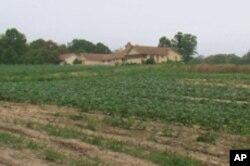 租借给义工农场的26公顷的土地