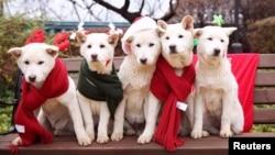 نگهداری از حیواناتی چون سگ، گربه، پرنده و ماهی در آمریکا رایج است.