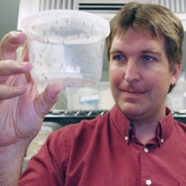 Michael Riehle, holding genetically altered mosquitoes, and his team work in a highly secure lab environment to prevent genetically altered mosquitoes from escaping.