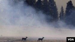 Los incendios en el parque nacional Apache-Sitgreaves generaron el desplazamiento de miles de animales silvestres.