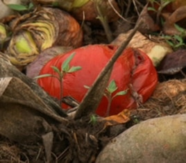 Curt Havens let the vegetables in his garden rot, rather than harvest them for fear the ground water was contaminated.