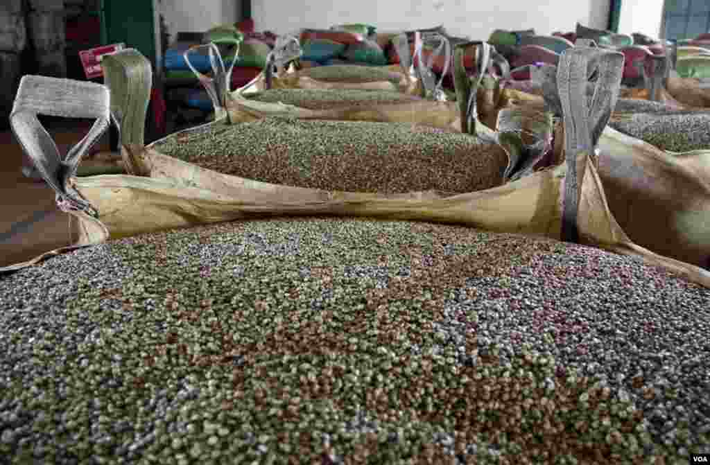 Coffee beans being sorted at the factory. (D. Schearf/VOA)