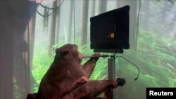 Elon Musk's Neuralink shows monkey with brain-chip playing videogame by thinking.